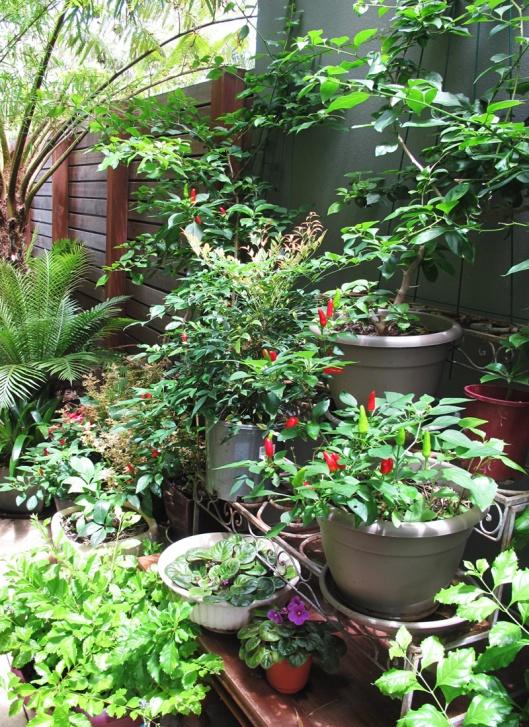 Garden image by Deidhre Wauchop